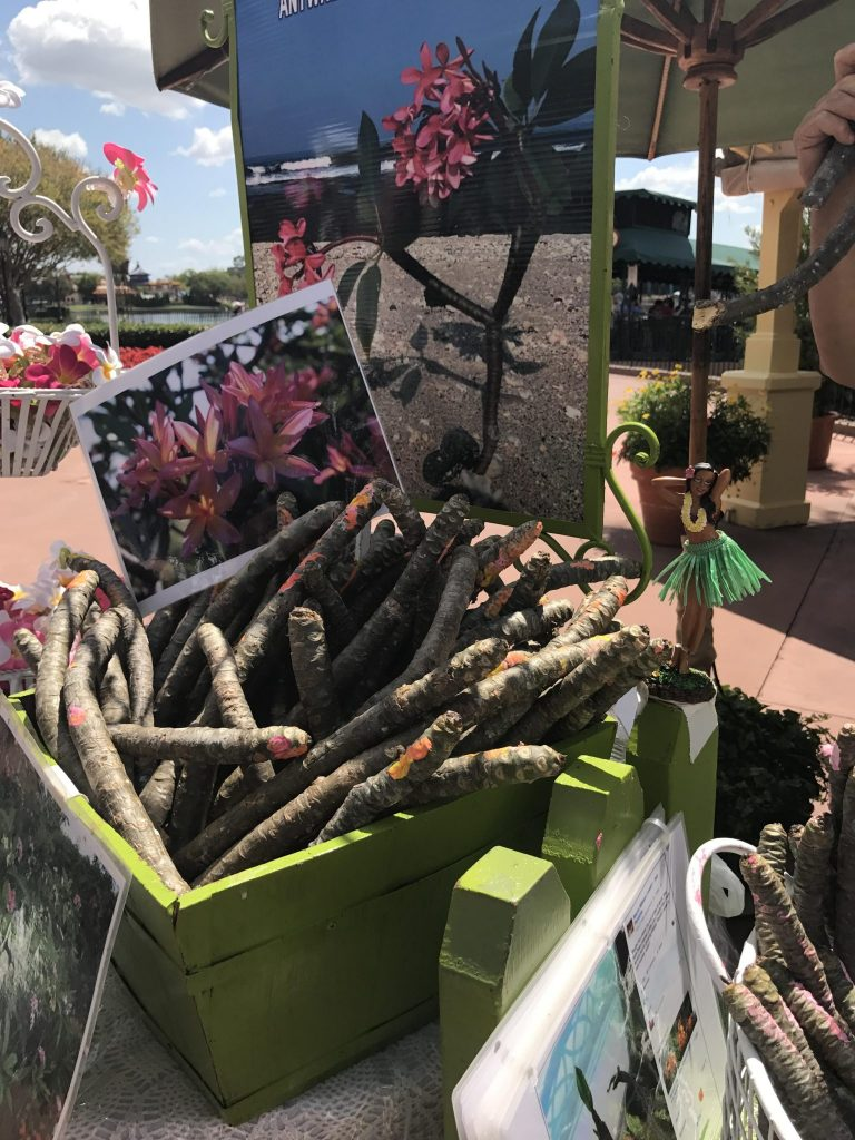 Just Plumerias hybrid cuttings at Epcot Flower and Garden Festival