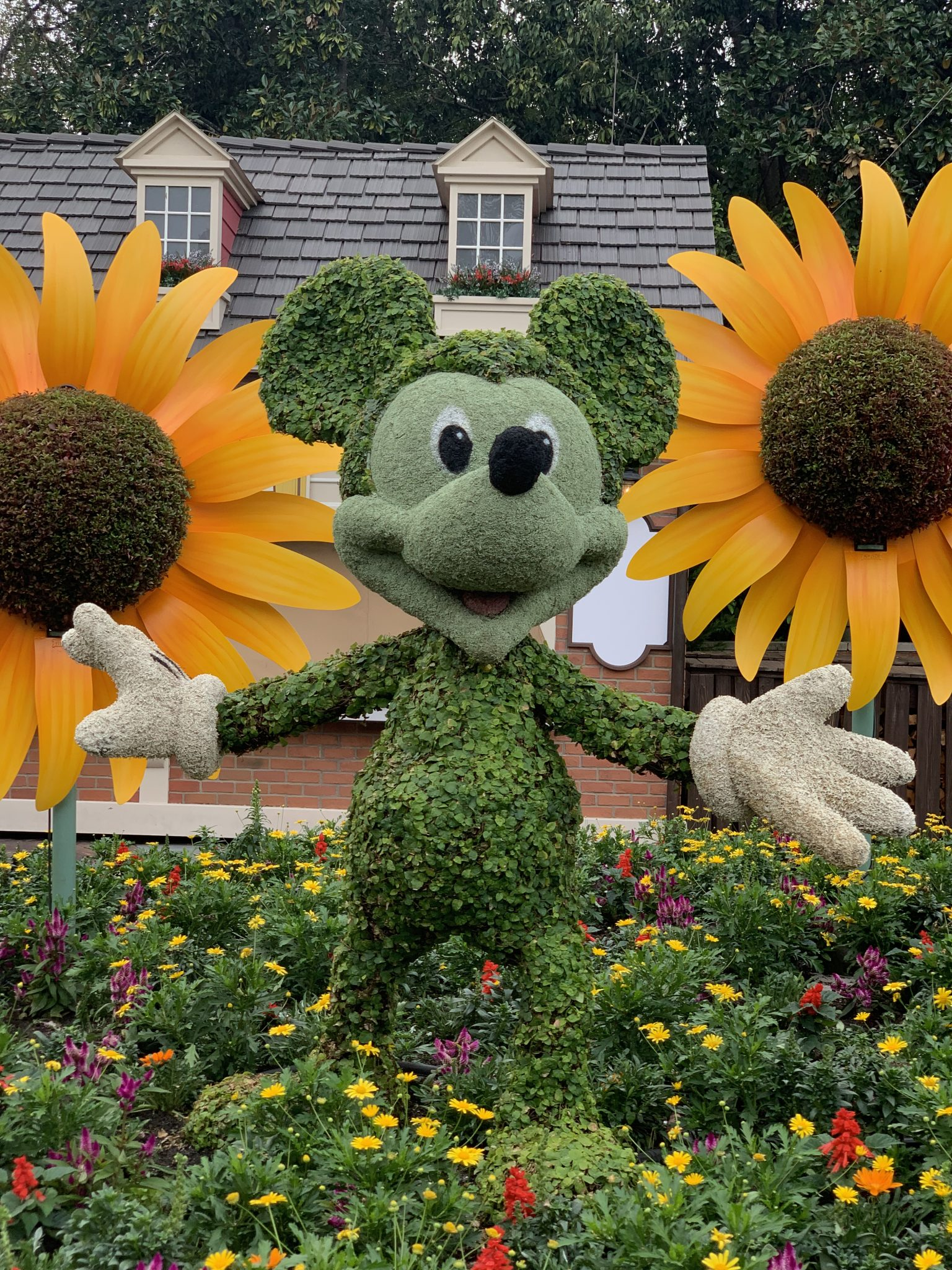 Up close of Mickey topiary in the American Showcase at Epcot Flower and Garden Festival