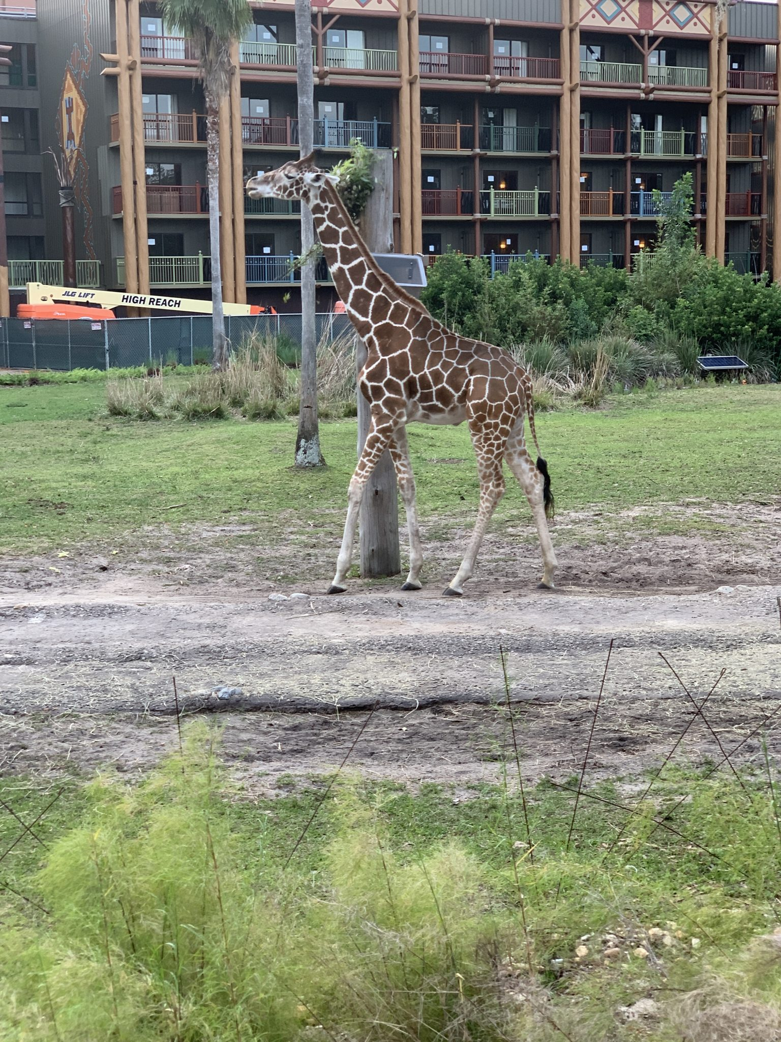 animals on the savannah at Animal Kingdom Lodge